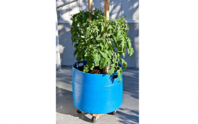 Need a new planter, what about a 200L Blue Drum?